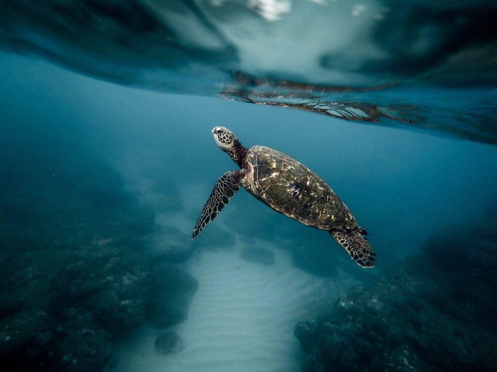 Hawaii Scuba Diving